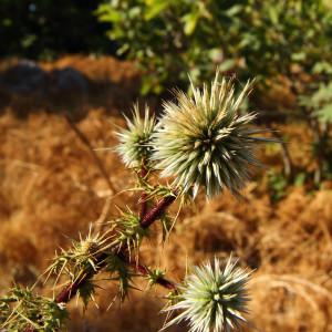 ... тези бодливи растения на платото ...