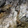 ... в басейна забелязваме колко много жаби има ...!