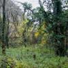 ... насред буйна растителност ...