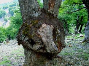 ... всяко дърво има своя магия ...