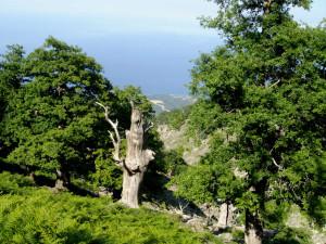 ... странни дървета ...