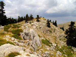 На височина 1,600-2,250м. в областта на Fterolakka ...